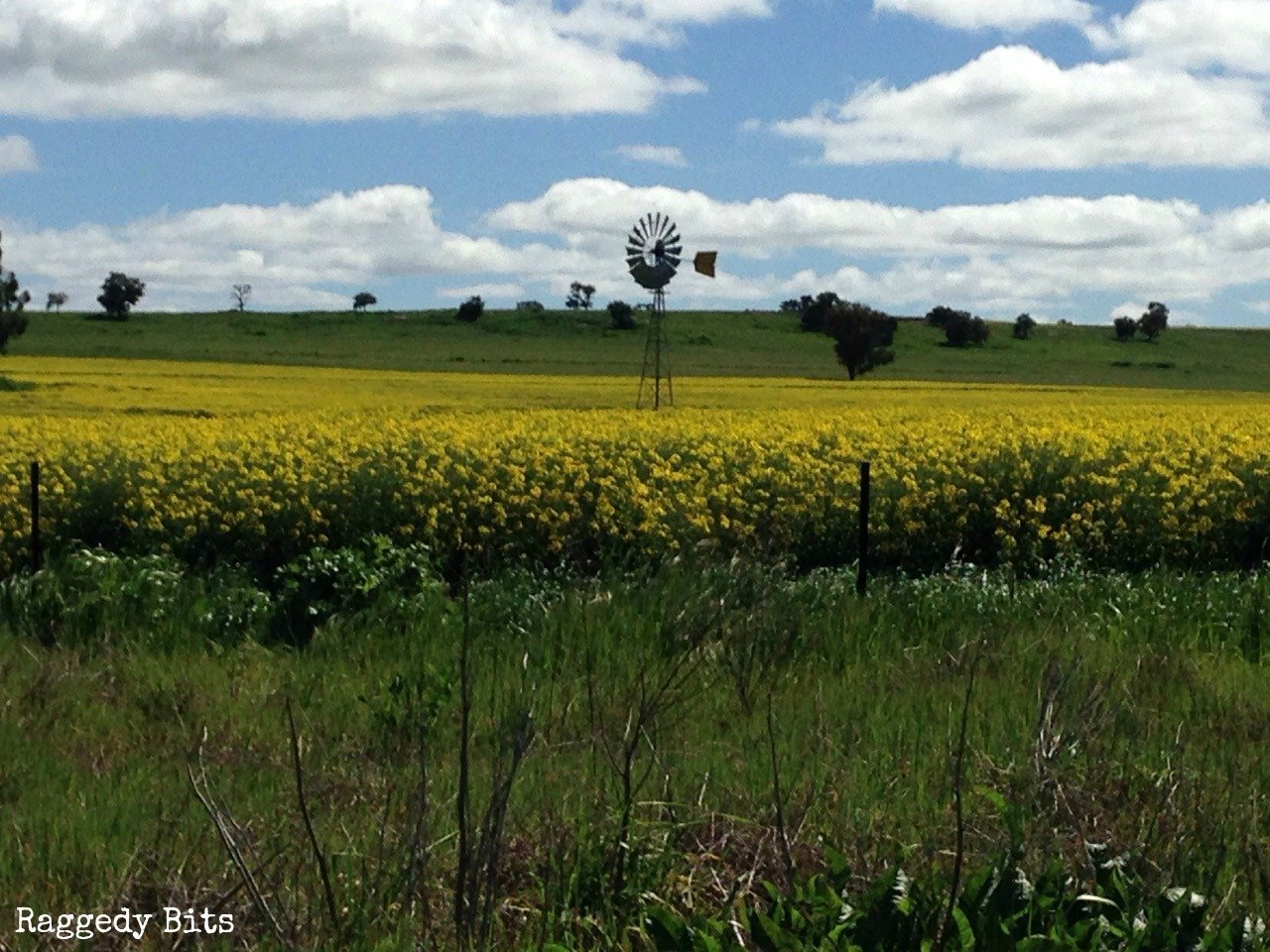 Let me take you on a fun Eugowra Country Road Trip Adventure and share some photo's of the beautiful country side of  the outer West in New South Wales.