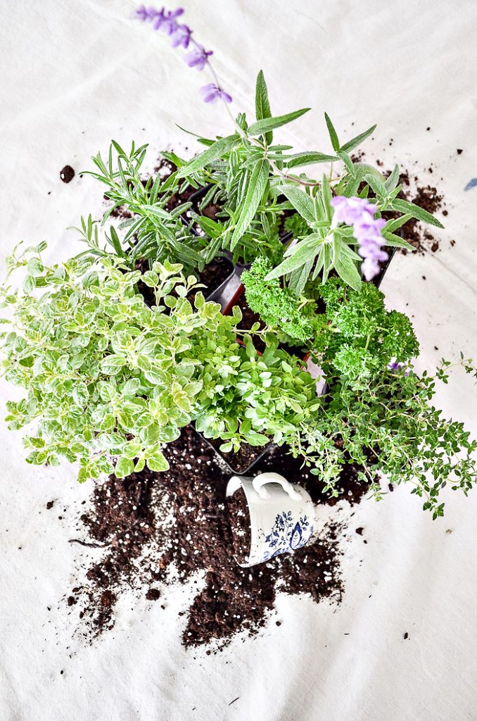 Herb Container Guide which is a feature for Waste Not Wednesday-207 by Stone Gable   www.raggedy-bits.com
