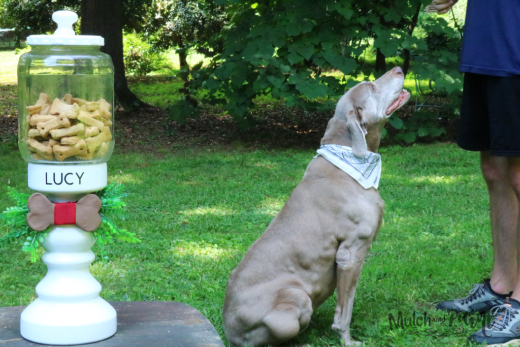 DIY Dog Treat Jar which is a feature for Waste Not Wednesday-238 by Mulch & Paint | www.raggedy-bits.com